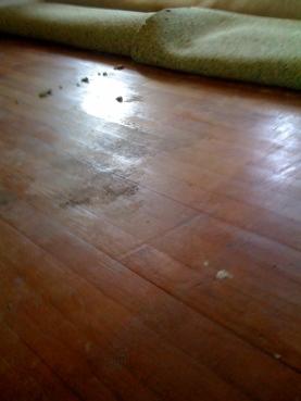 pulling_carpet_up_living_room.3.10